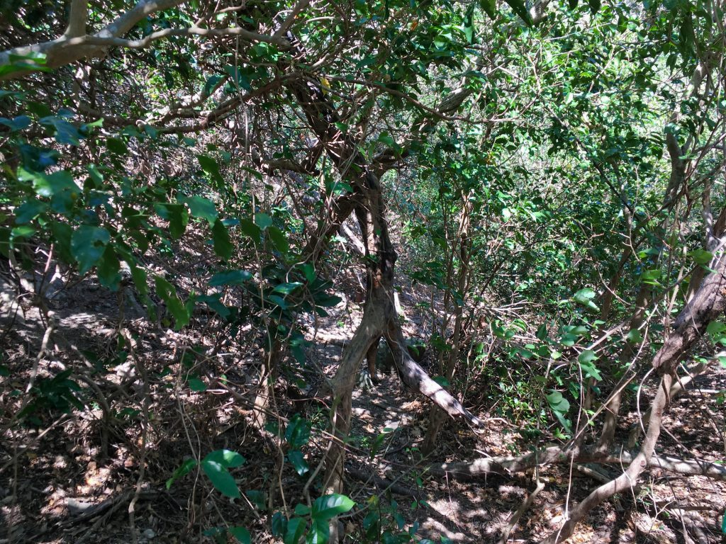 Trail in dense tree and plant cover