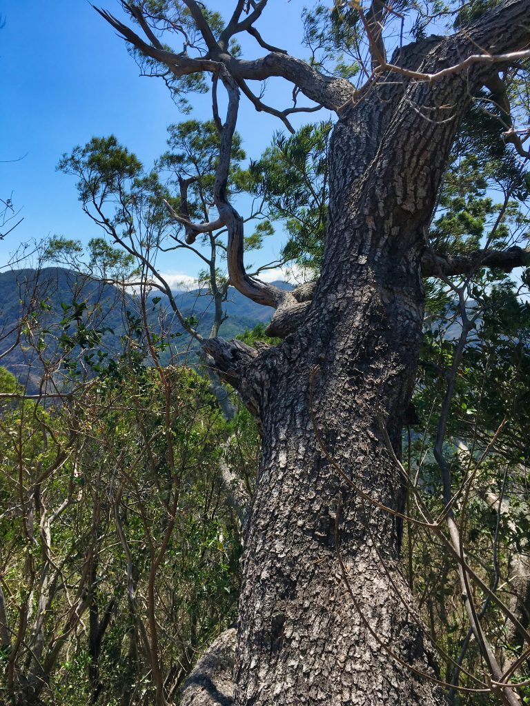 Tree with mountains in background - blue sky