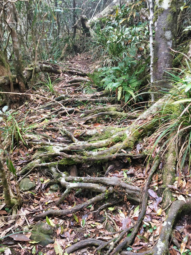 Moldy tree roots