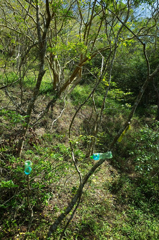 Tees with plastic bottles hung and a faint trail leading up mountain