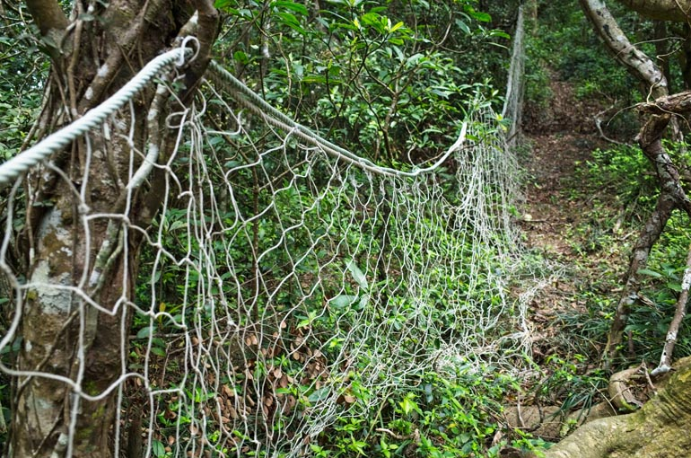 Fishing netting hung to trees