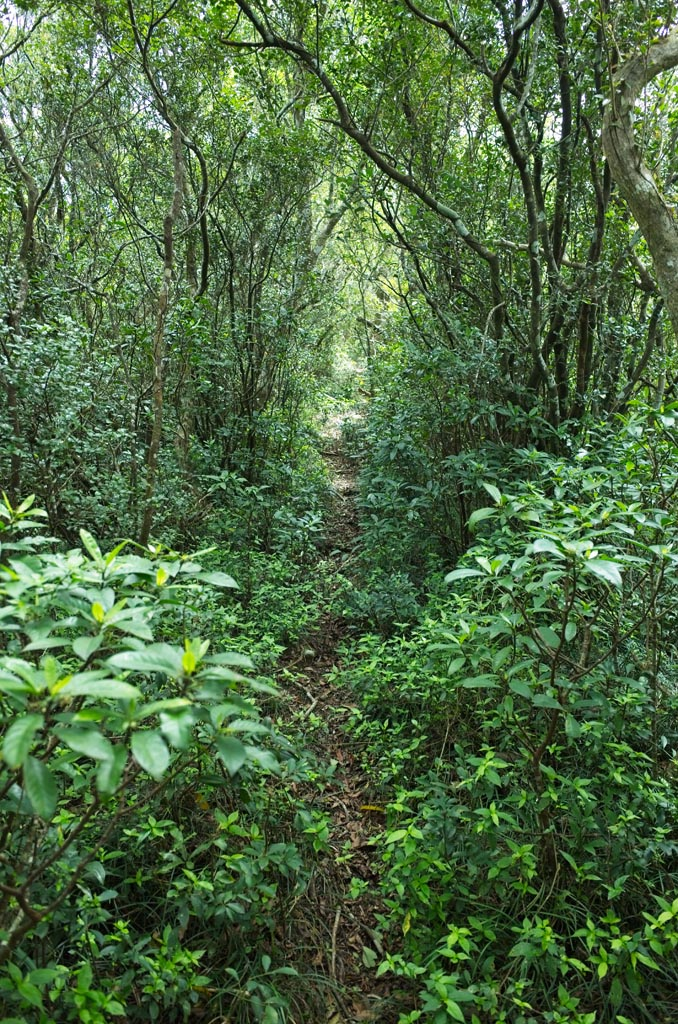 Single track trail through jungle