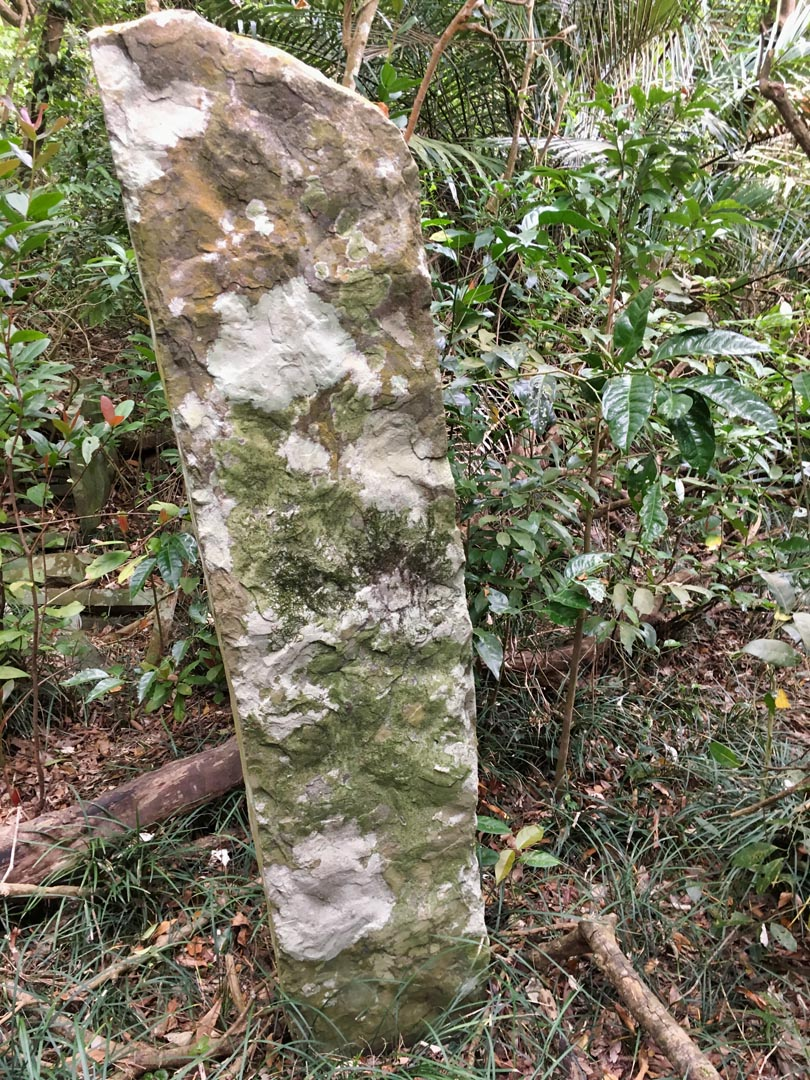 Large, thin stone coming up out of the ground