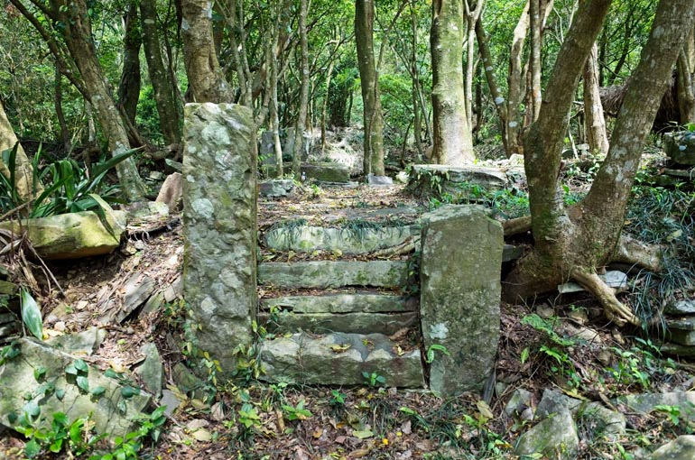 Old stone stairs going up - trees around and behind