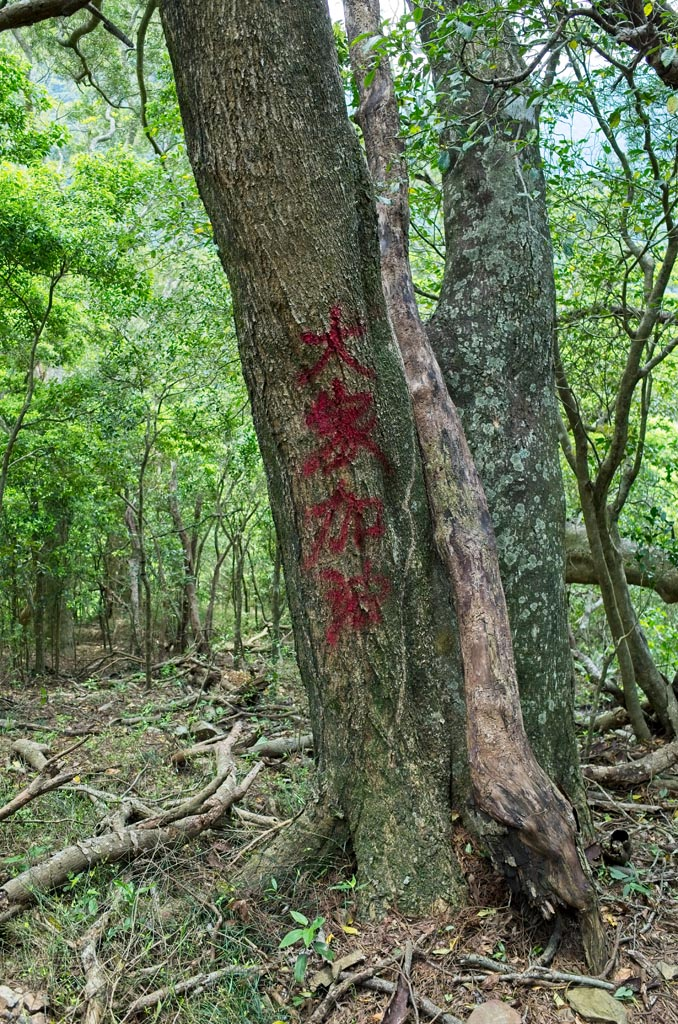 Tree with 大家加油 DaJia JiaYou spray-painted in red