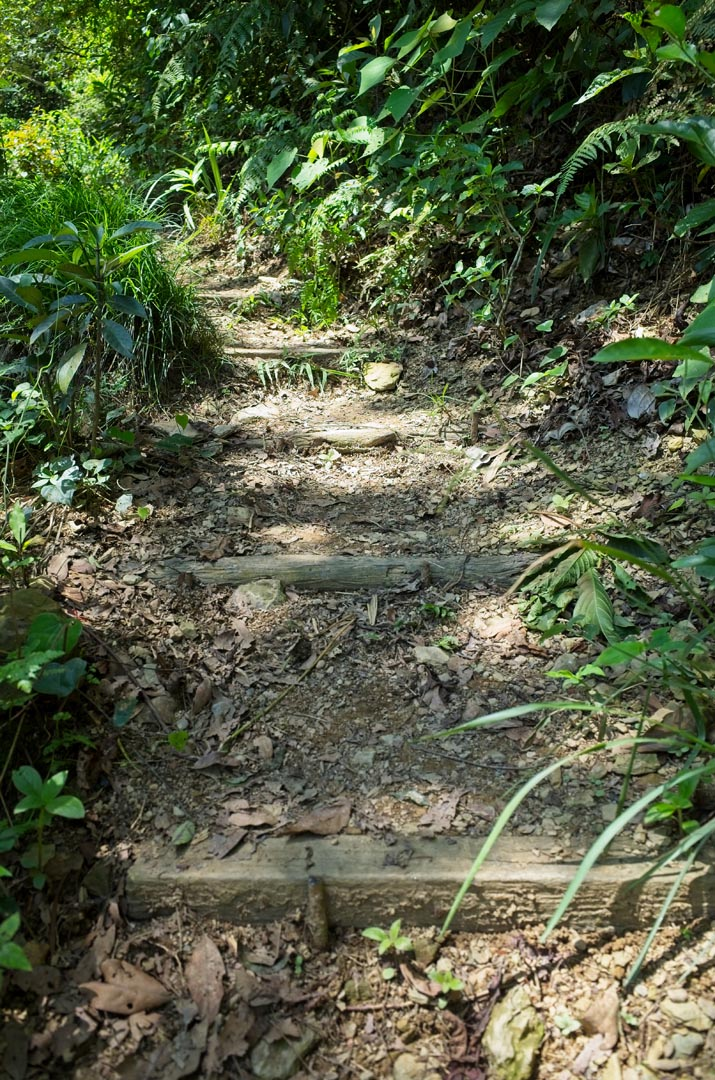 trail going up - steps created with logs
