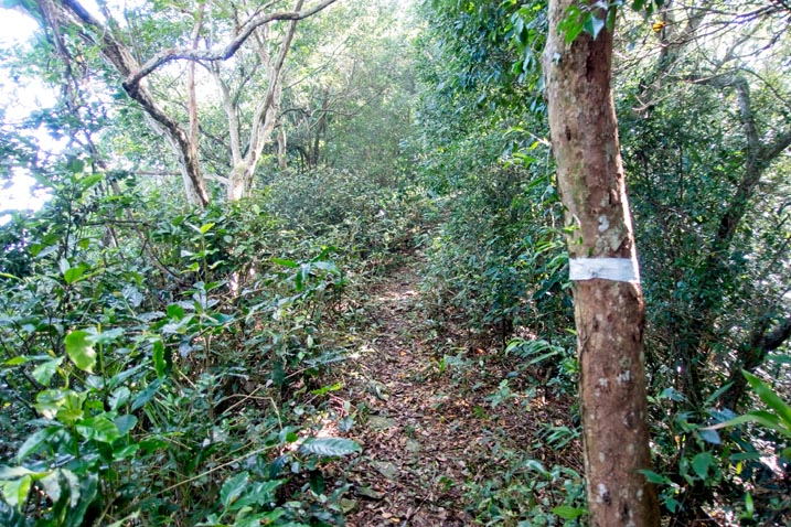Ridge trail - easy to see - white ribbon around tree - brush and trees all over