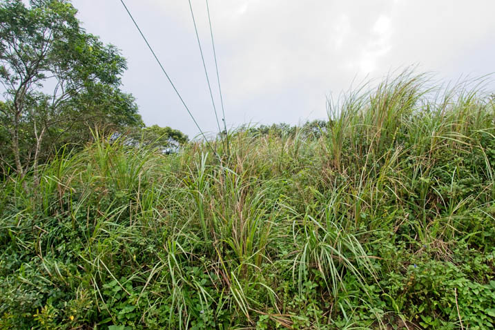 Tall grass and overcast sky above - three cables at top left disappearing in the grass above