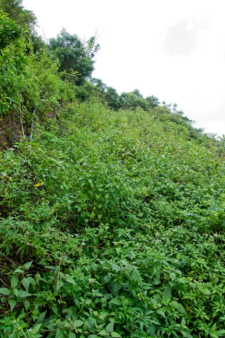 Overgrown road going up at a somewhat steep angle