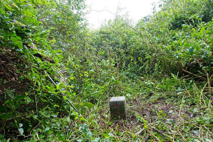 BaShiMoShan 巴士墨山 Triangulation marker - overgrowth all around - grass around it cut