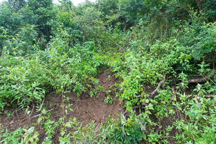 Steep natural small embankment - jungle all around it