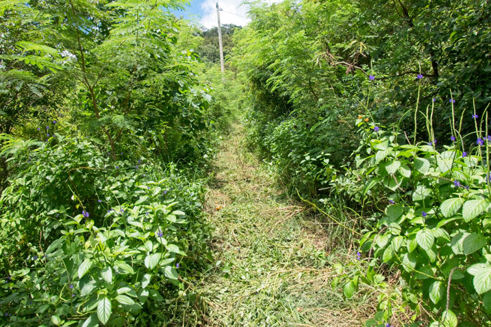 Small recently cut grass path with telephone pole at end - overgrowth on either side of path