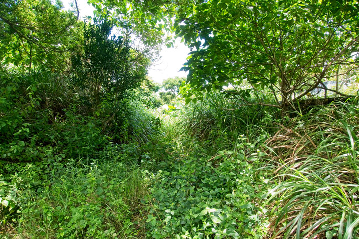Lots of trees and overgrowth - a barely discernible path in the center