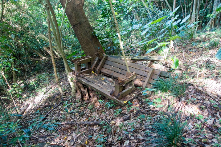 Destroyed wooden bench lying next to a tree