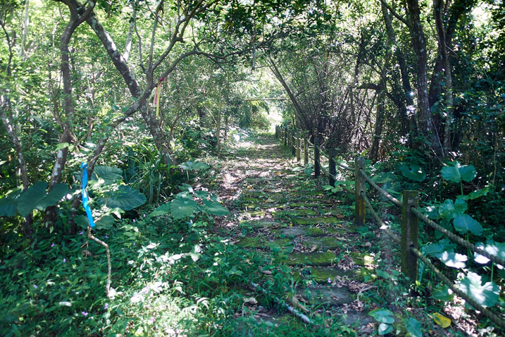 Old, overgrown brick laid path going up - concrete fence on right and trees all around