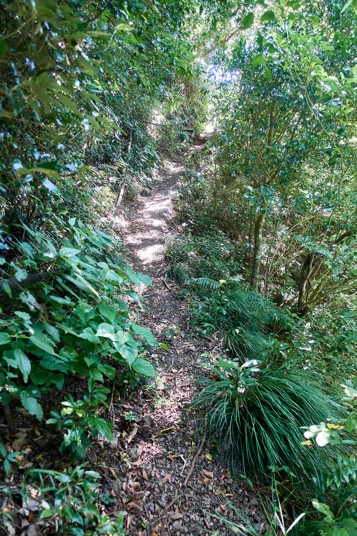 Single track dirt trail - plants on either side