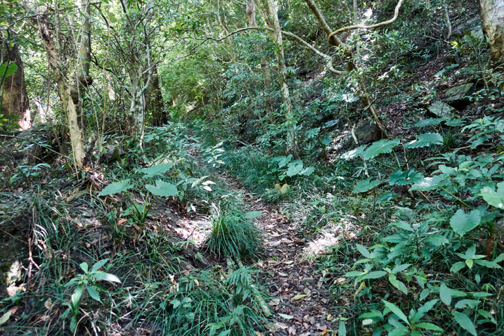 single-track trail - trees and plants on either side