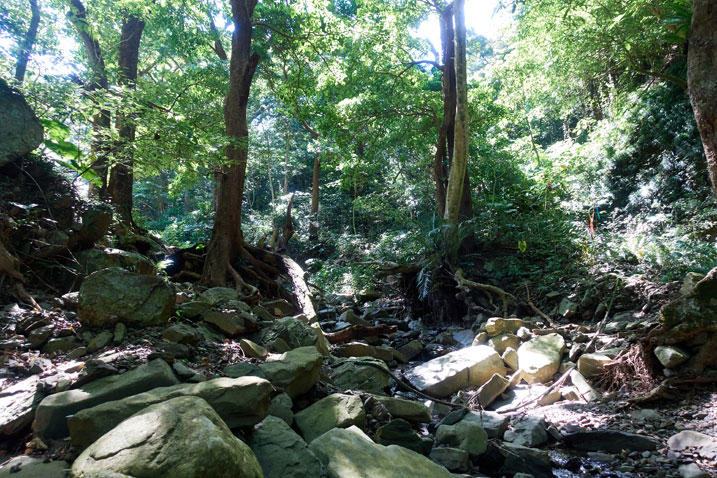rocky stream bed - shadows - trees in the back