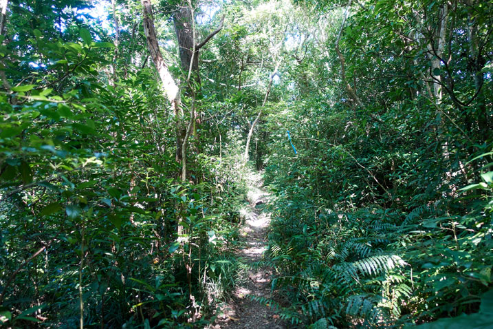 Single track trail - trees and plants on either side