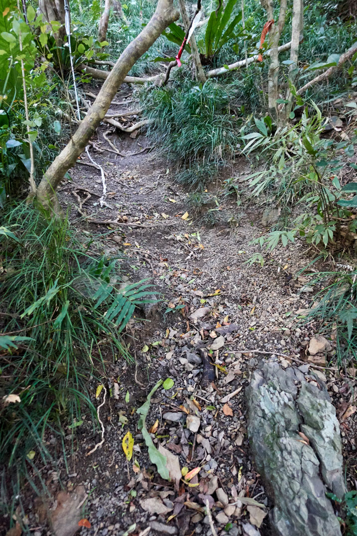 Steep uphill - dirt trail - trees at top - rope towards the top - red and orange ribbons at top