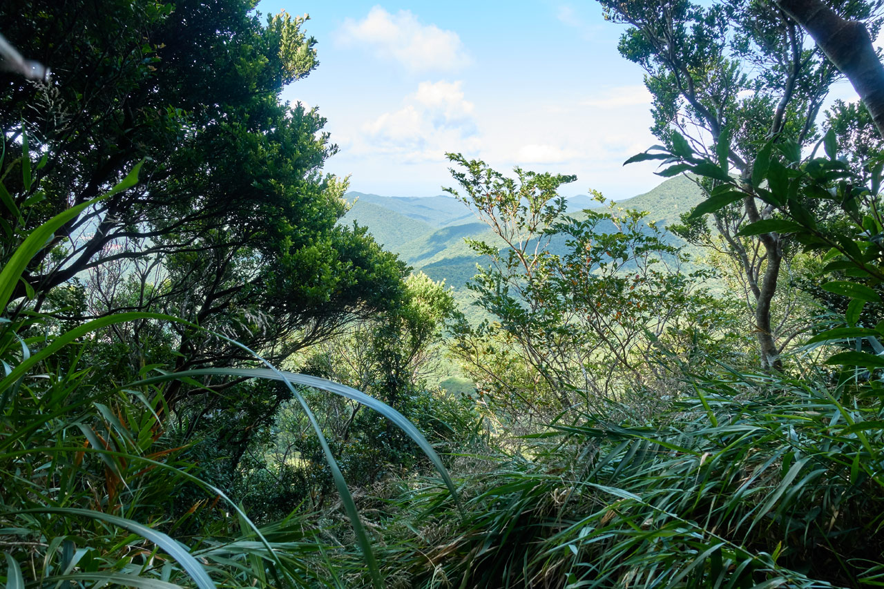 Mountains in the distance - blue skies and some white clouds - trees and plants obscuring most of the view