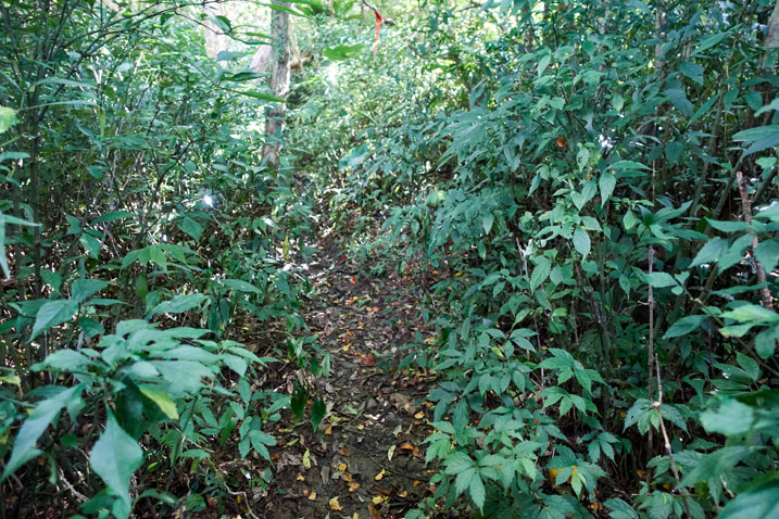 single track trail - plants on either side