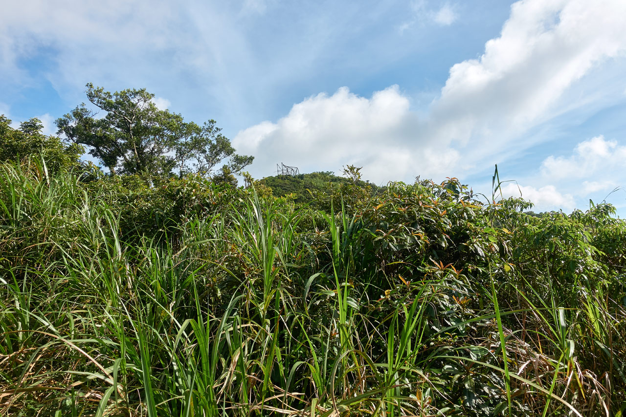 Tall grass at bottom of picture - blue skies and white clouds above - metal structure on top of nearby mountain