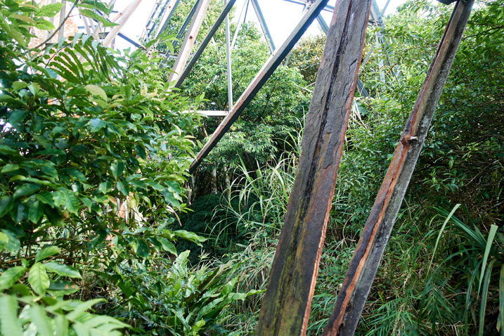 metal beams - trees and plants all around