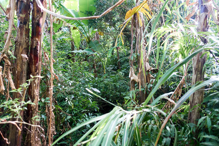 taiwan jungle - trees, plants and lots of overgrowth