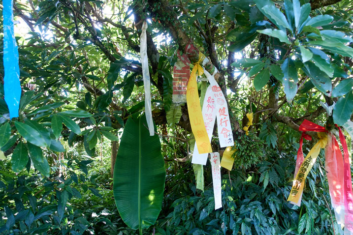 Many hiking ribbons attached to a tree