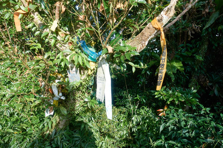 several hiking ribbons attached to a tree