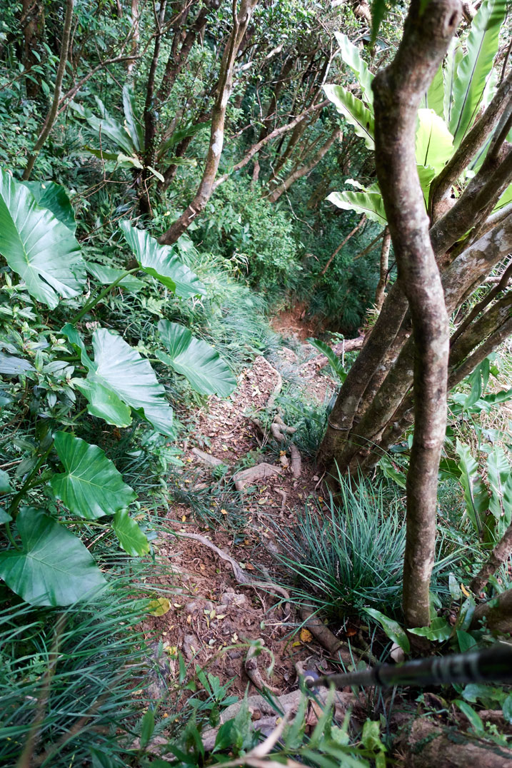 looking down at a steep trail - trees on right side - plants on left side