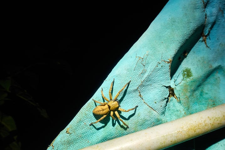 Large yellow spider on backside of faded blue tarp - black behind