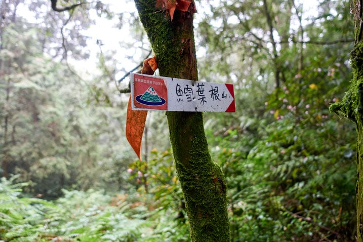 Trail ribbon and sign attached to a tree