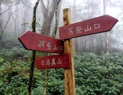 Sign post with three red signs in forest