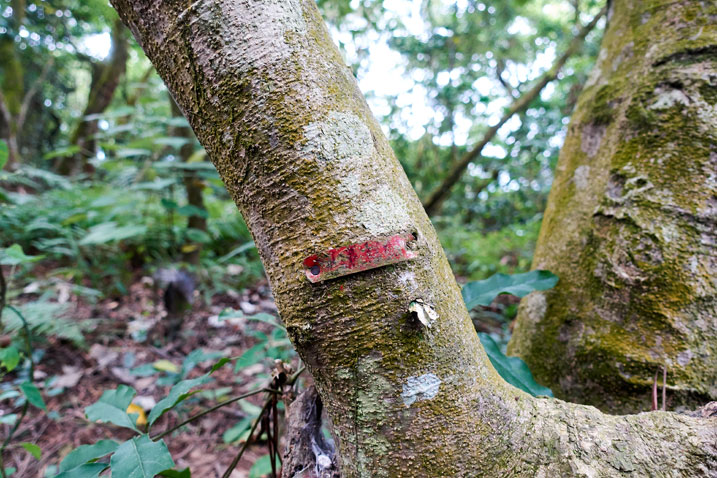 Small red placard nailed to a tree