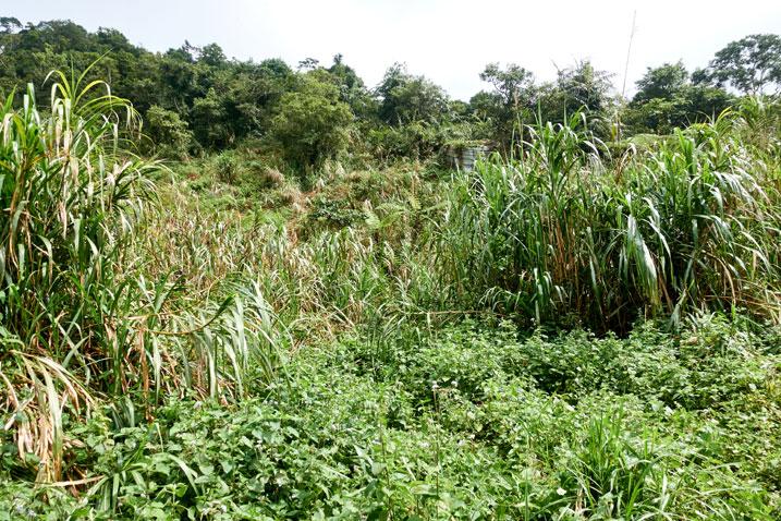 Overgrown ridgeline - jungle
