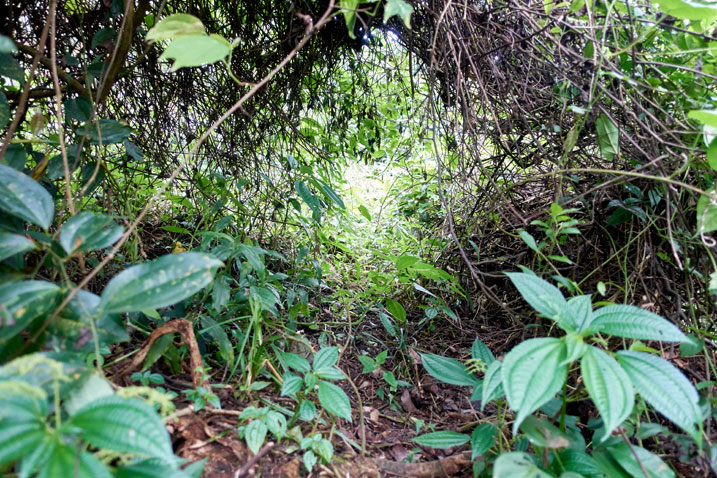 Passage through thick jungle overgrowth