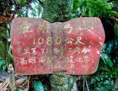 Red sign being eaten by tree