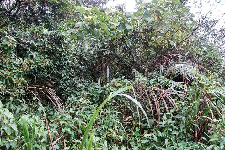 Taiwan jungle
