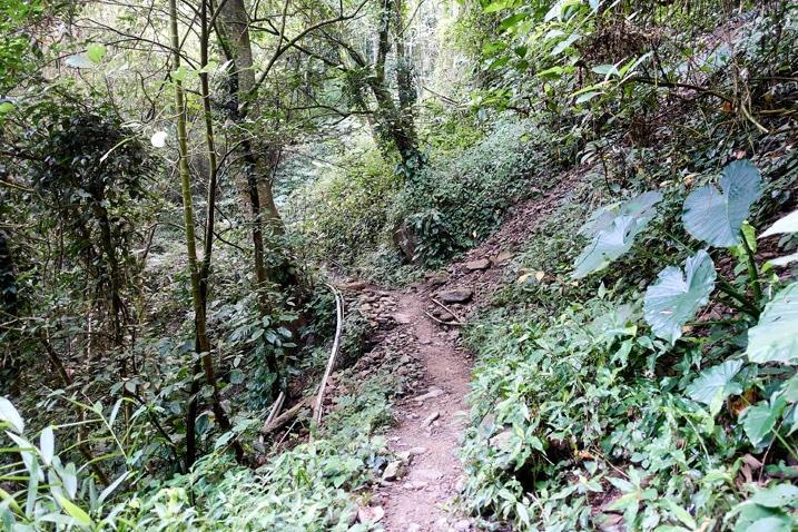 Mountain single track trail in Taiwan