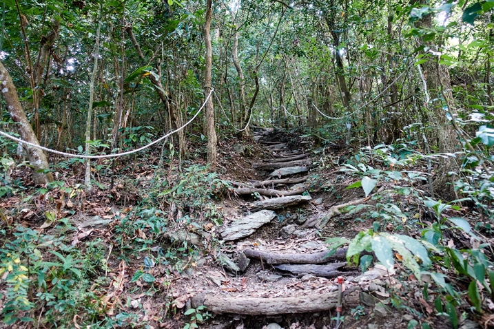 Mountain trail with makeshift log stairs - rope on the left