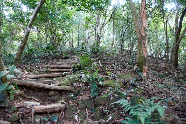 Steep mountain trail with logs as steps