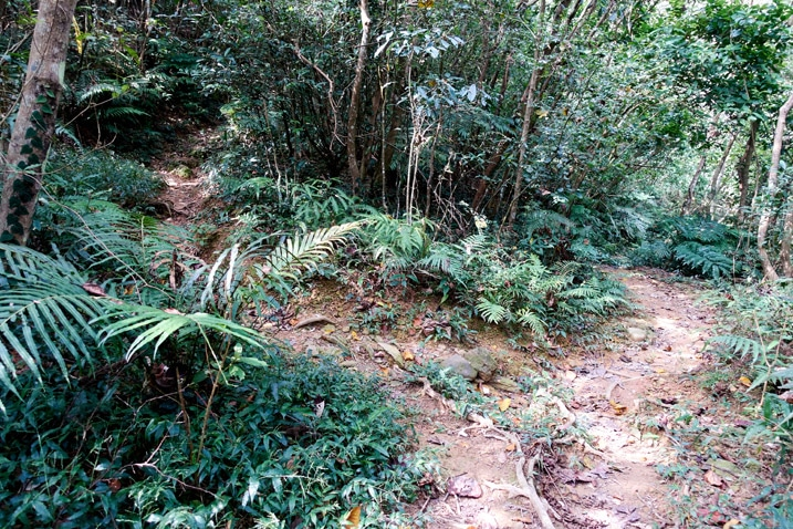 Mountain trail that splits