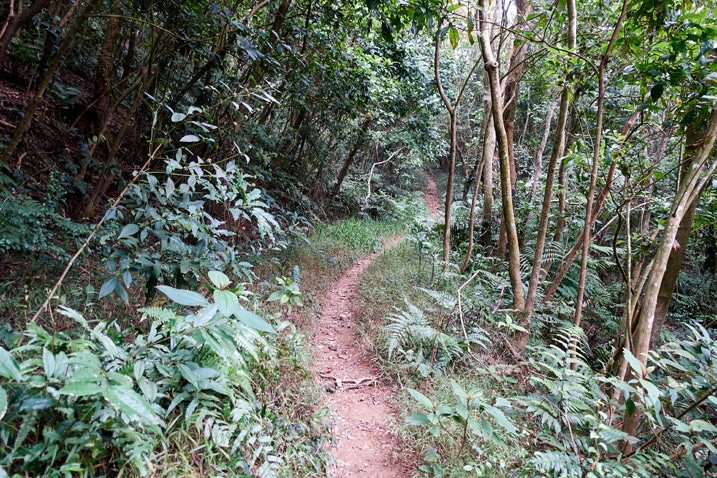 Mountain single track trail