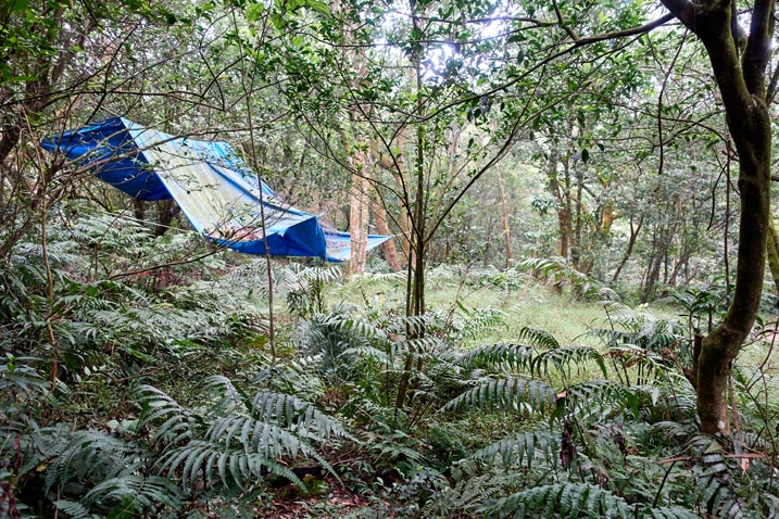 Tarp set up in the forest