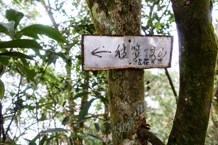 Metal sign with Chinese writing attached to a tree