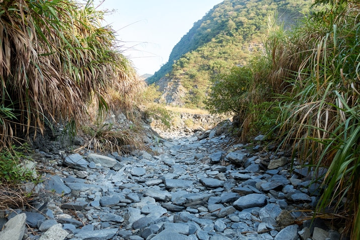 Dry riverbed with tall grass on either side - ZuMuShan 足母山