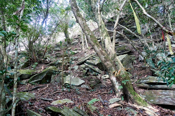 Rocks and trees going up mountain - ZuMuShan 足母山 trail