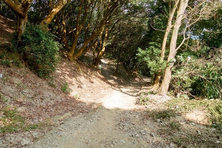 Dirt road - trees on either side - WeiLiaoShan Hike – 尾寮山